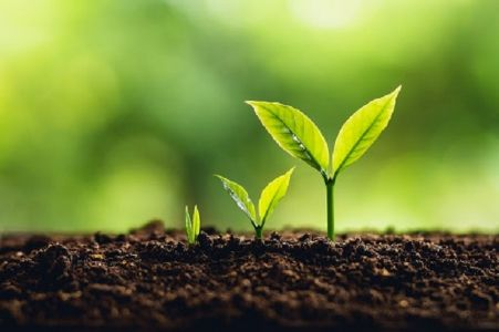 Growth Is The OnlyEvidence Of Life