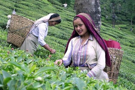 CCPA urges Govt not to reduce import duty on tea