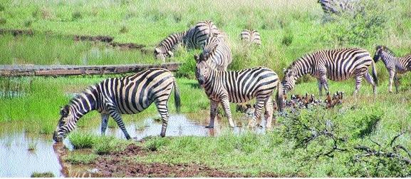 Wildlife population_1&nbs