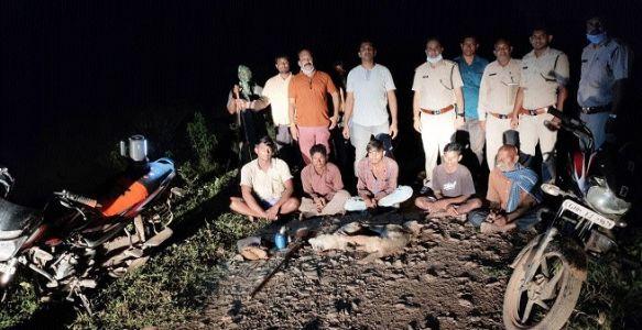 Five arrested for hunting wild jackals