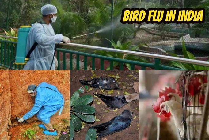 1200 birds found dead _1&