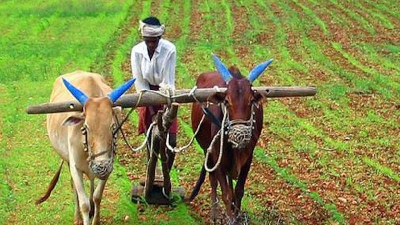 Farm sector _1