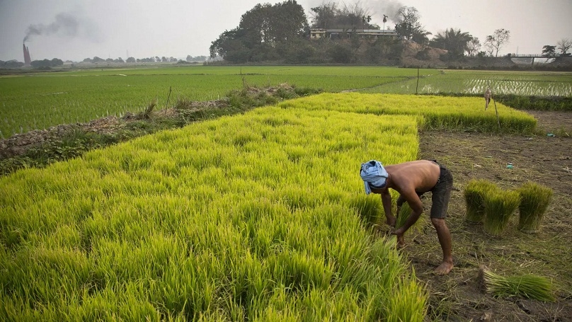 agriculture sector_1