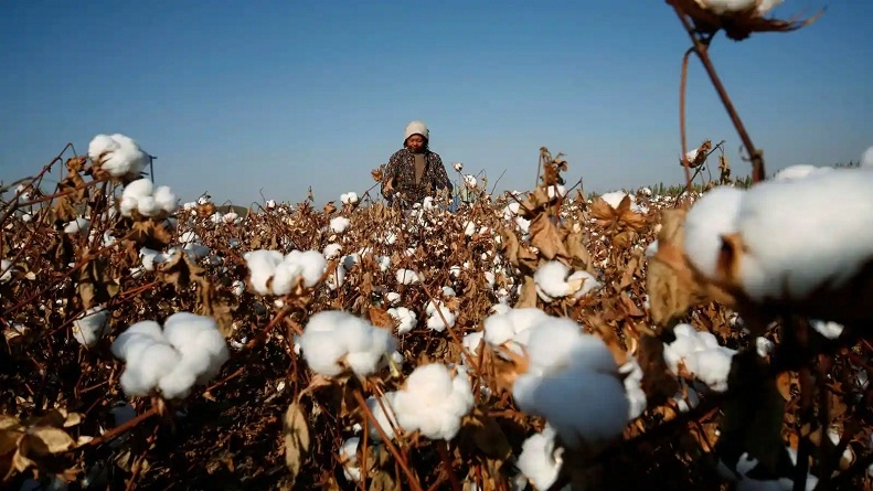 Cotton exports_1&nb