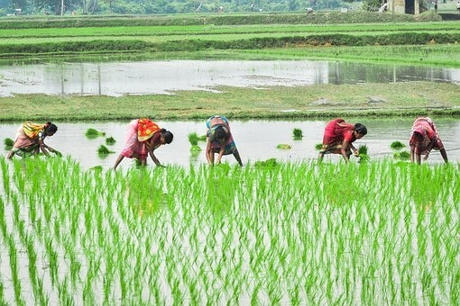 Increase in farm work _1&
