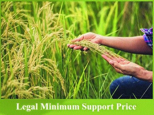 Govt hikes paddy MSP _1&n