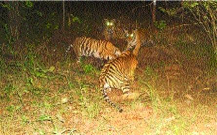 Cubs seen_1H