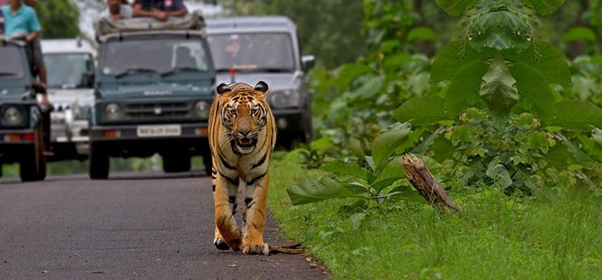 Monsoon Safari_1&nb