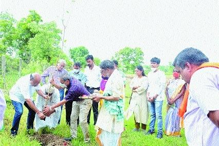 sapling plantation _1&nbs