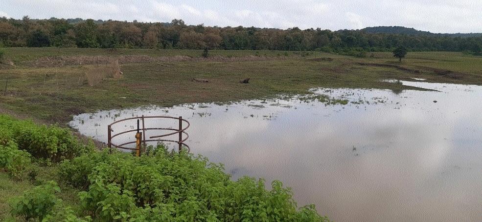 Swami reservoir _1